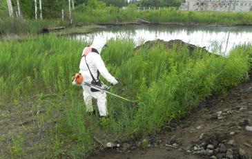 Очистка территории прилегающей к водоёму от травы и кустарника