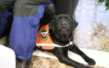 Собака-спасатель Маха лучшая в своём деле
