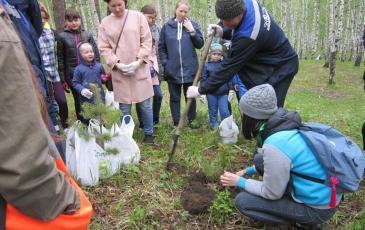 Мастер-класс по посадке деревьев