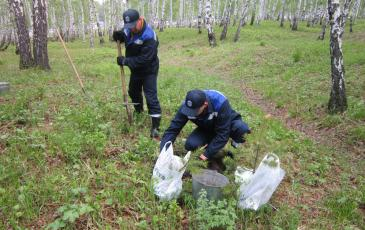 Посадка деревьев спасателями Иркутского ТП