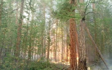 Лесной пожар на территории Прибайкальского Национального заповедника