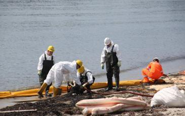 Спасатели «ЭКОСПАС» устанавливают боновые заграждения